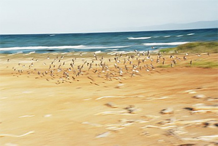 Aves-al-vuelo